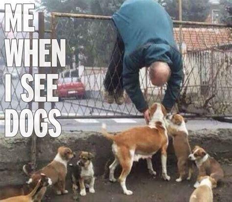 Crazy Dog Lady Meme - i m a dog lover i wanna hug them when i see them funny