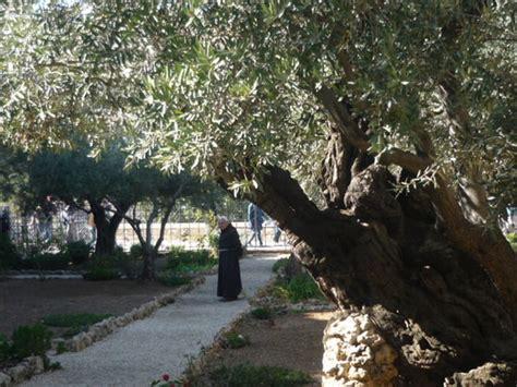 garden  gethsemane jerusalem