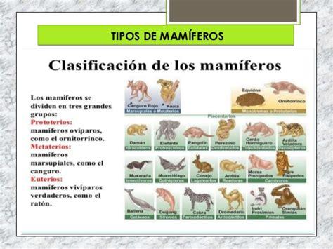 sistema de mam 237 feros depredadores aislado sobre blanco fotos de vertebrados mamferos aves fotos de reptiles