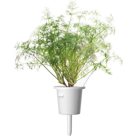 click and grow refills click grow smart garden refill dill 3pcs click grow