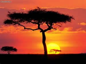 nature masai mara game reserve sunset kenya picture nr 18620