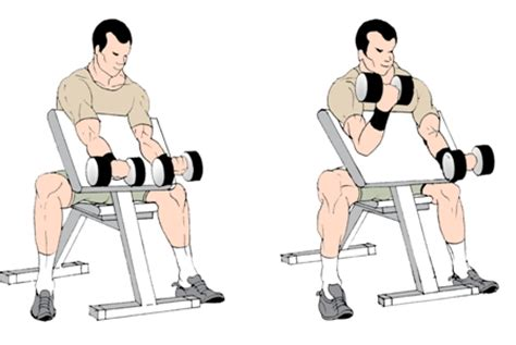 preacher bench exercises workout like a pro beginner training