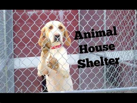 animal house shelter animal house shelter youtube