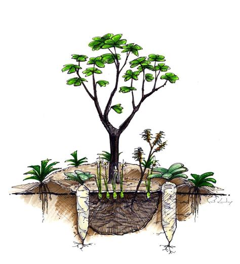 permaculture guilds fruit trees permaculture ecologia design 240 344 5625