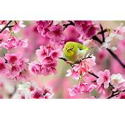 Birds Animals Pink Flowers Blossoms Wallpapers HD