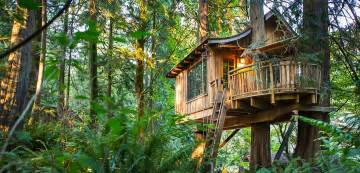 Pete Nelson Treehouses Of The World - treehouse point