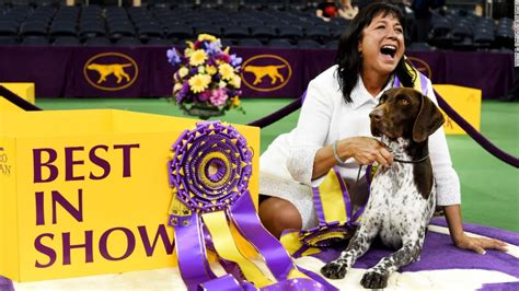 what channel is westminster show on westminster show california journey wins top prize cnn