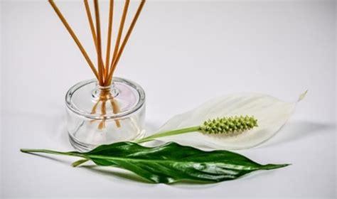Essential Aroma Terapi Humidifer Pewangi Ruangan 11 huiles essentielles pour l hiver grippes rhumes de