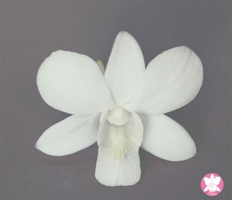 Chanel Cs01 White welcome to grand siam orchid