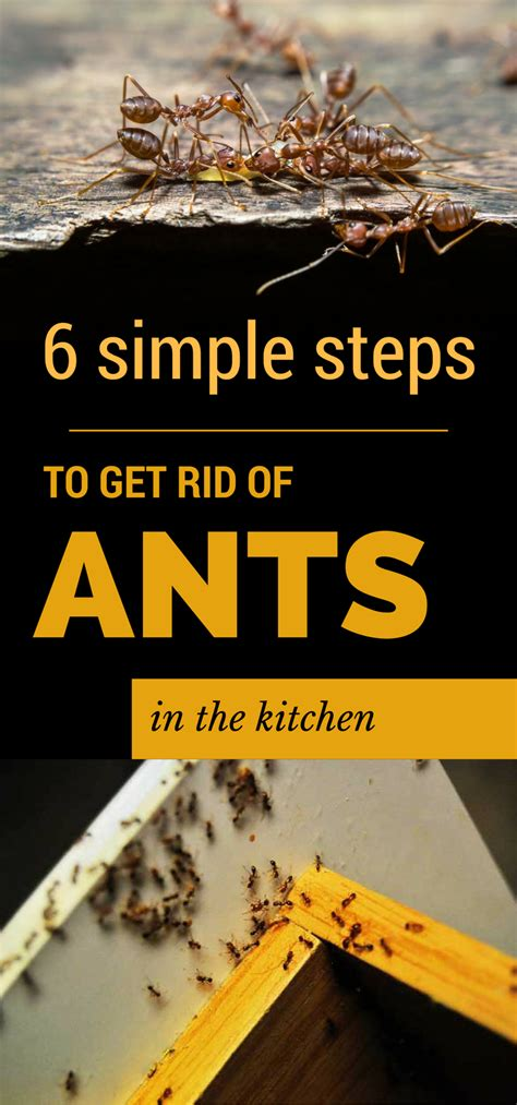 Getting Rid Of Ants In The Kitchen by 6 Simple Steps To Get Rid Of Ants In The Kitchen