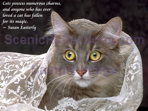 cat wallpaper with quotes beautiful cats images beautiful cool wallpapers