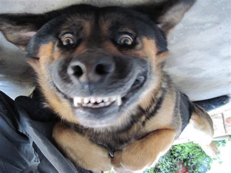 really puppy happy lol pictures and