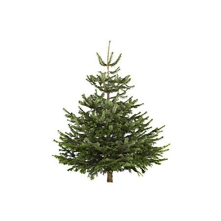 real christmas trees bq medium nordman fir cut tree departments diy at b q