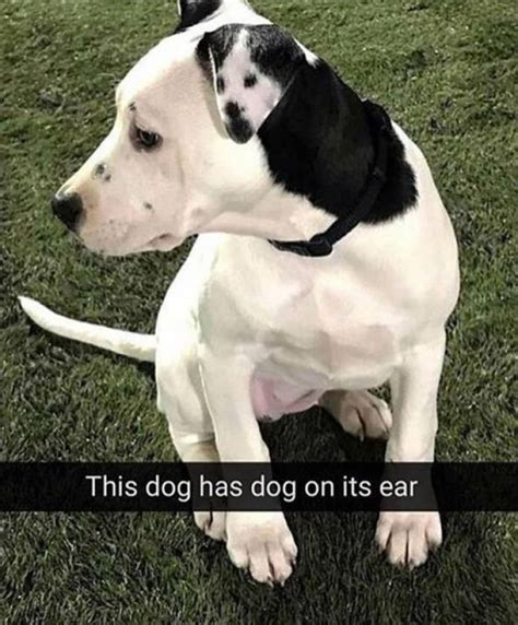 it s a dogs the with a on its ear ladblab