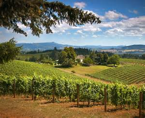 Wineries Near Willamette Valley Number One In World Wine Regions