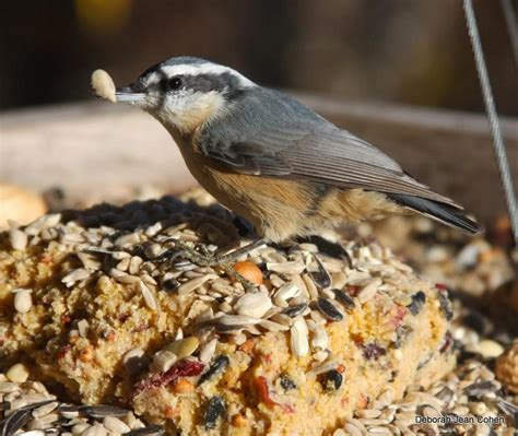 the best suet in the known universe