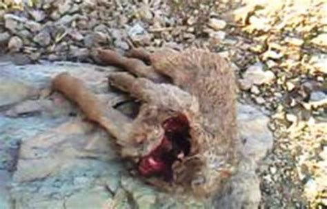 12 m 225 s locas peleas de animales captado por la c 225 mara videos de animales ataques de animales salvajes ataque