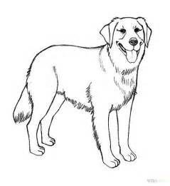 golden retriever coloring pages realistic golden retriever coloring pages how to draw a