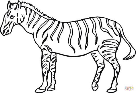 zebra finch coloring page ausmalbild zebra geht davon ausmalbilder kostenlos zum