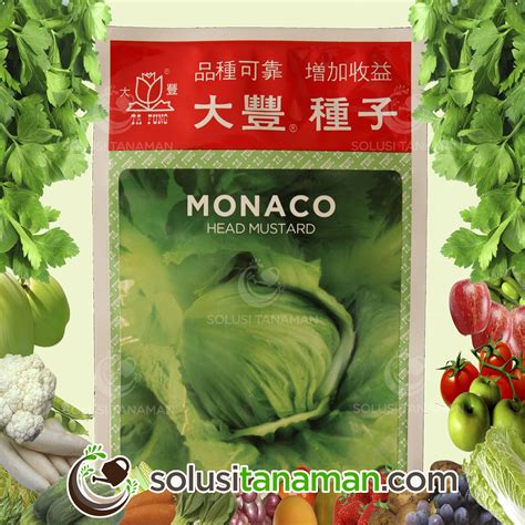 Bibit Sayur Wortel bibit sayur buah solusi tanaman