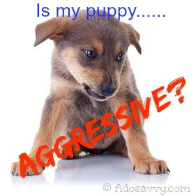 aggressive puppy biting and growling got an aggressive puppy