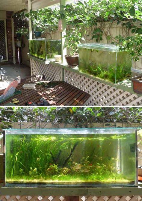 small garden  backyard aquarium ideas  blow