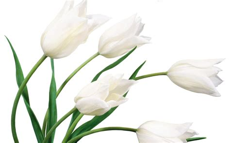 White Flowers by White Flower Weneedfun