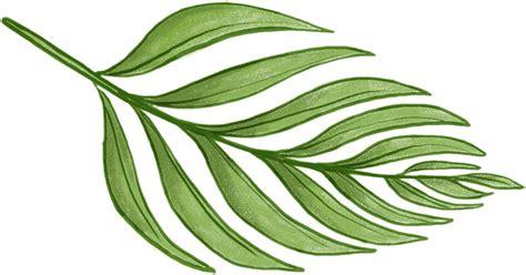 leaf pattern png fern leaf pictures cliparts co