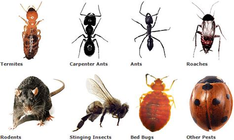 Easy Way To Get Rid Of Bed Bugs The Best Pest Control Service In Melbourne Australia
