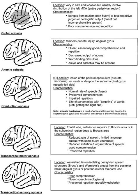 Aphasia Worksheets by 25 Best Ideas About Aphasia Therapy On