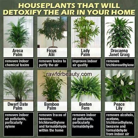 best houseplants for clean air indoor plants for indoor health diy home decor pinterest plants gardens and plants indoor