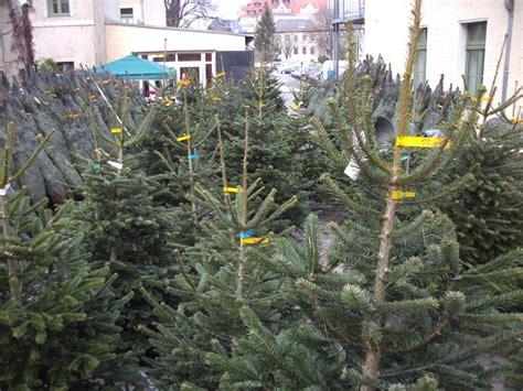 weihnachtsbaum verkauf weihnachtsbaumverkauf in dresden