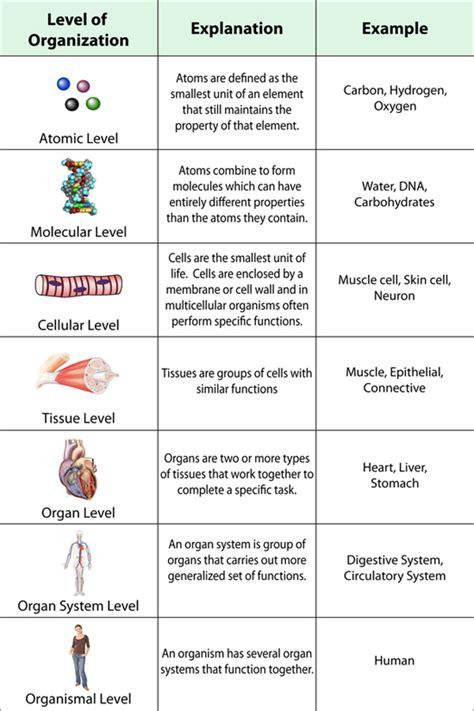 levels of organization diagram buffonescience9 unit 1 basics of