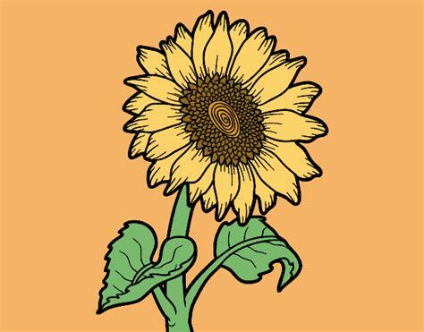 fiori di girasole disegno fiore di girasole colorato da utente non