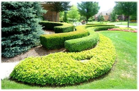 17 best images about flowers shrubs flowering tree bushes on pinterest gardens front yard