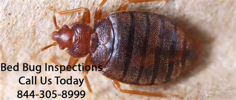 bed bug inspection nyc bed bug inspections dependable exterminating