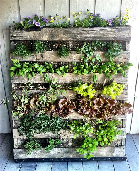Diy Vertical Pallet Garden Home Gardening In Spaces