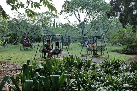 outdoor swing singapore mrbrown com girl on a swing in the singapore botanic gardens
