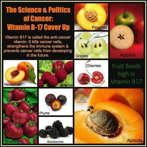 94 fruit with seeds fruit seeds high in vitamin b17 education