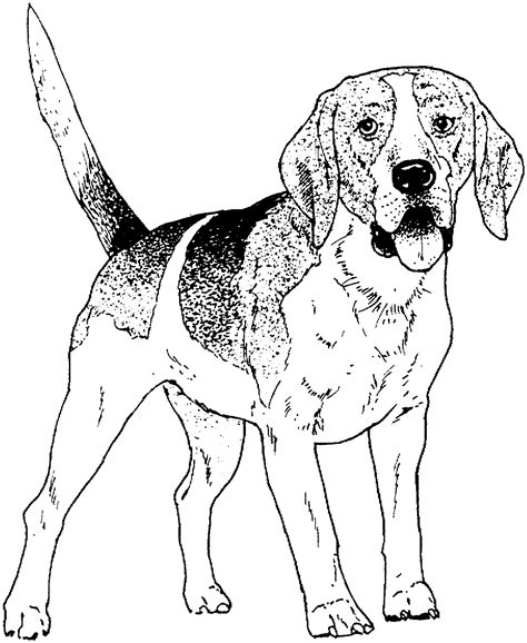 coloring pages of dogs for adults color pages printable breed coloring pages