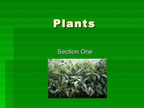 section 22 1 introduction to plants introduction to plants