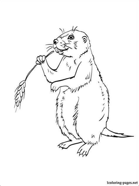 coloring page prairie dog prairie dog coloring page coloring pages