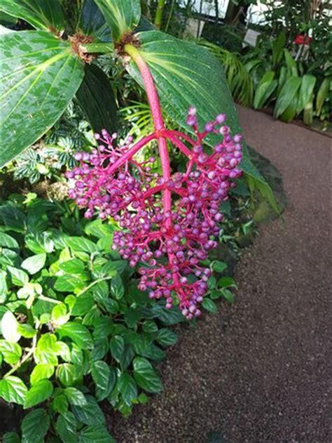 Botanischer Garten Jena by Botanischer Garten Jena Germany Updated 2017 Top Tips Before You Go Tripadvisor