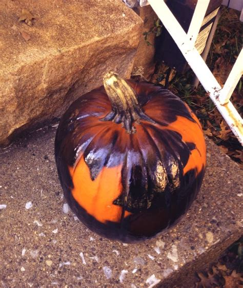 spray painting pumpkins 12 best pumpkin painting images on painted