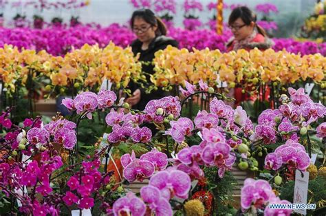 new year flower tradition news china city guide china travel service roamchina
