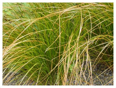 Grasses And Bamboos Jayne Anthony Garden Design