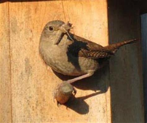 turned birdhouse