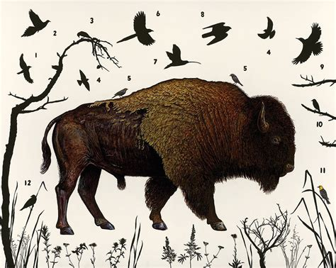 Wildlife Works Organic Fashion Sale by Invisible Boundaries Explores Yellowstone S Wildlife