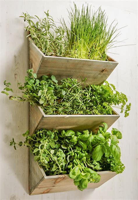 wall mounted wooden kitchen herb planter kit with seeds shabby chic large wall mountable herb planter kit with