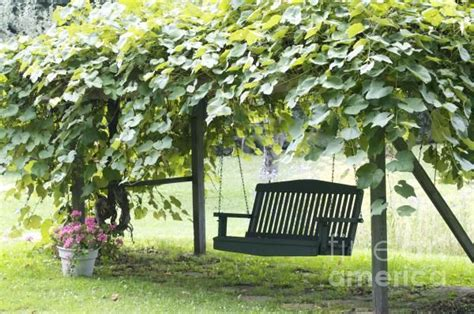 trellis with swing grape arbor with swing just don t have grass underneath